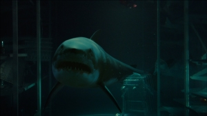 bait-movie-great-white-shark-underwater