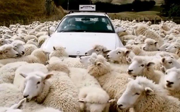 Black Sheep (2006 New Zealand)_002
